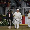 Royal16_Holstein_L32A4011