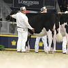 Royal16_Holstein_L32A4124