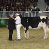 Royal16_Holstein_L32A4168