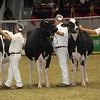 Royal16_Holstein_21M9A0089