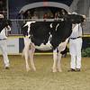 Royal16_Holstein_21M9A0323