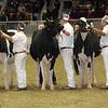 Royal16_Holstein_21M9A0090