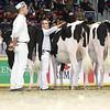 Royal16_Holstein_L32A4099