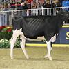 Royal16_Holstein_21M9A0148