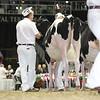 Royal16_Holstein_L32A3883