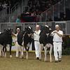 Royal16_Holstein_21M9A0026