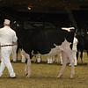 Royal16_Holstein_21M9A0007