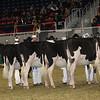 Royal16_Holstein_21M9A0036