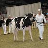 Royal16_Holstein_21M9A0290