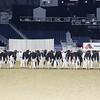Royal16_Holstein_L32A3974