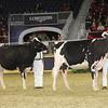 Royal16_Holstein_21M9A0218