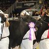 Royal16_Holstein_21M9A0355