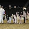 Royal16_Holstein_L32A4173