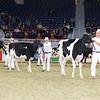 Royal16_Holstein_L32A3927