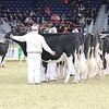 Royal16_Holstein_L32A3995