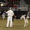 Royal16_Holstein_21M9A0056