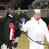 Royal16_Holstein_L32A4036