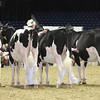 Royal16_Holstein_L32A3881