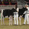 Royal16_Holstein_21M9A0276