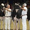Royal16_Holstein_L32A4037