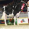 Royal16_Holstein_L32A4078