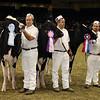Royal16_Holstein_21M9A0374