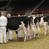 Royal16_Holstein_21M9A0123