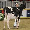 Royal16_Holstein_21M9A0300