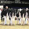 Royal16_Holstein_L32A3978