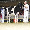 Royal16_Holstein_L32A3935
