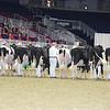 Royal16_Holstein_L32A3892