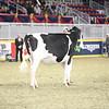 Royal16_Holstein_21M9A0181