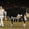 Royal16_Holstein_21M9A0012