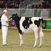 Royal16_Holstein_L32A4152
