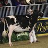 Royal16_Holstein_21M9A0061