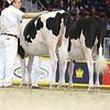 Royal16_Holstein_L32A4123