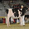 Royal16_Holstein_21M9A0309
