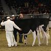 Royal16_Holstein_21M9A0028