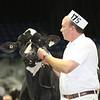 Royal16_Holstein_L32A3903