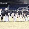 Royal16_Holstein_L32A3973