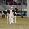 Royal16_Holstein_21M9A0328