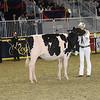 Royal16_Holstein_21M9A0292