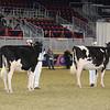 Royal16_Holstein_21M9A0217