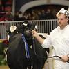 Royal16_Holstein_21M9A0171