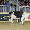 Royal16_Holstein_21M9A0067