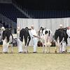 Royal16_Holstein_L32A3888