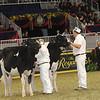 Royal16_Holstein_21M9A0287