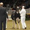 Royal16_Holstein_1M9A9995