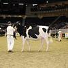 Royal16_Holstein_21M9A0084