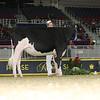 Royal16_Holstein_L32A4025